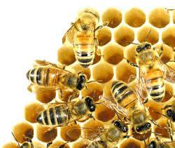 Abeille ruche miel - La ruche a miel ...